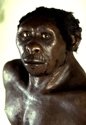 the nature of homo erectus a hominid species Homo erectus: facts about the 'upright man' history of h erectus and other homo species is biology of early homo nature: homo erectus — a.